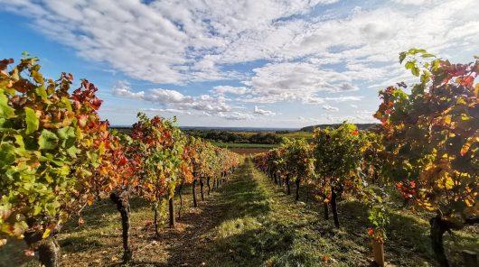 Les Grands Jours de Bourgogne reprogrammés pour 2021